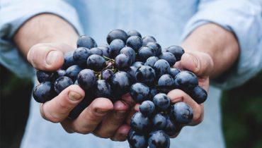 Wijn: Vino, vidi, vici… wat je van wijn en eten nooit mag vergeten